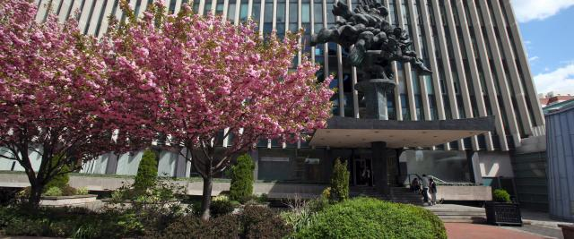 Cherry trees in bloom in front of Jerome Greene Hall